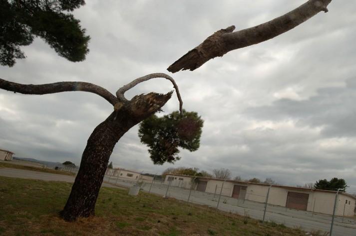04-dmheld-twig